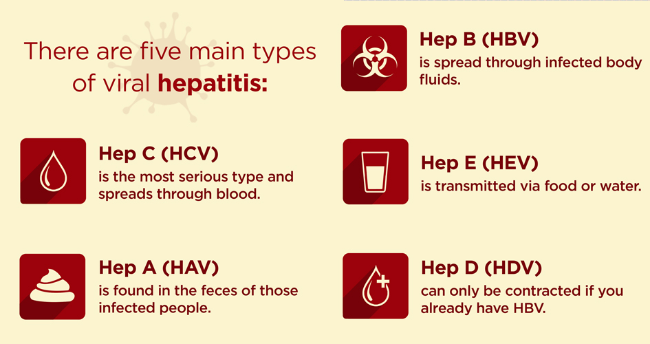 the different types of the hepatitis disease Hepatitis is the inflammation of the  there are five main types of viral hepatitis — a, b  although there is no vaccine for hepatitis d, the disease can still.